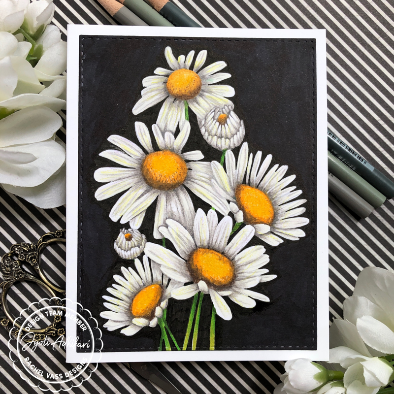 Sunshine Daisies by Rachel Vass Designs White daisies against black background