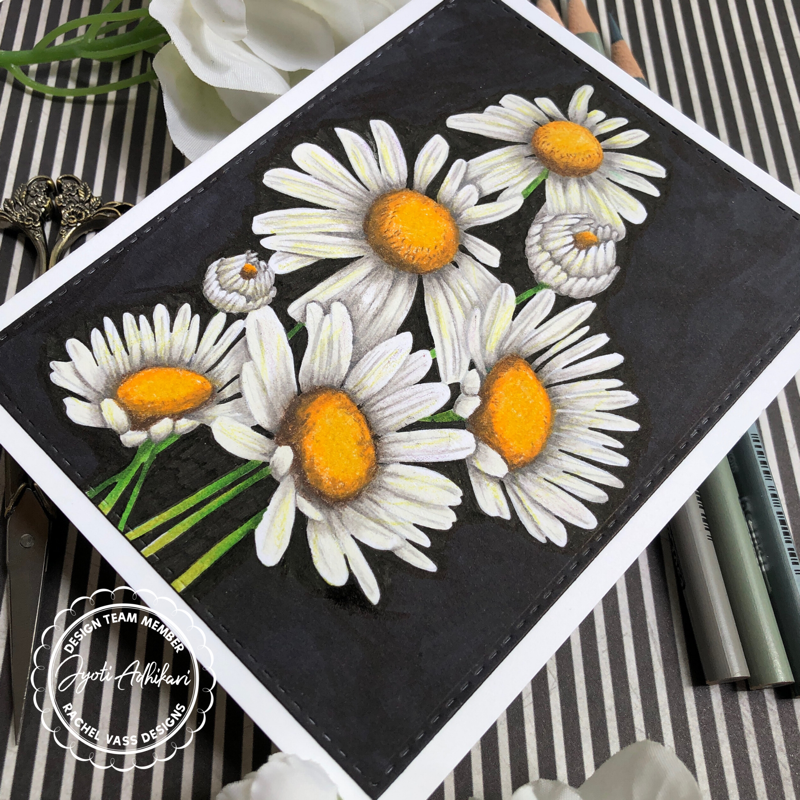 Sunshine Daisies by Rachel Vass Designs pencil colored with black background